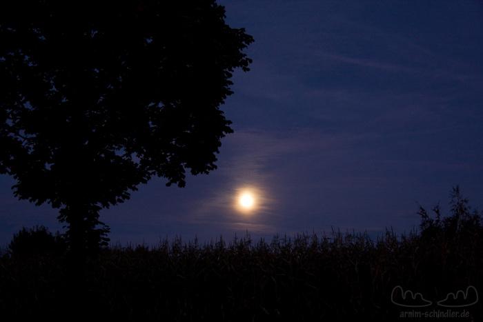 Baum und Maisfeld im Mondlicht