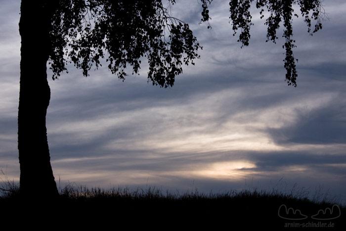 Abendhimmel eingerahmt von einem Baum