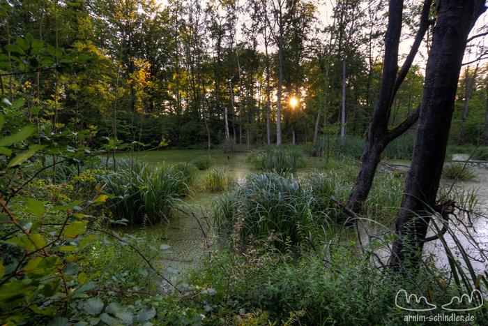 idyllischer Ort im Wald