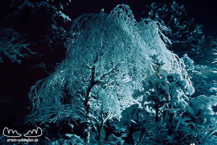verschneite Birke bei Nacht